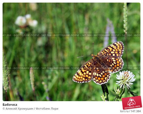 Бабочка, фото № 147384, снято 12 июня 2007 г. (c) Алексей Хромушин / Фотобанк Лори