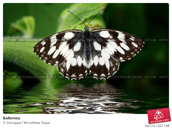 Бабочка, фото № 221148, снято 9 июля 2006 г. (c) Goruppa / Фотобанк Лори