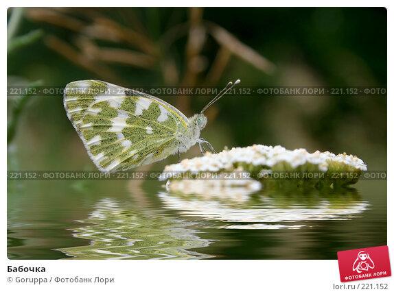 Бабочка, фото № 221152, снято 9 июля 2006 г. (c) Goruppa / Фотобанк Лори