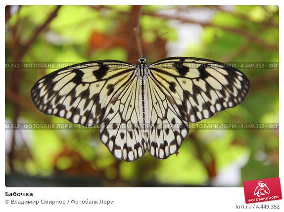 Бабочка. Стоковое фото, фотограф Владимир Смирнов / Фотобанк Лори