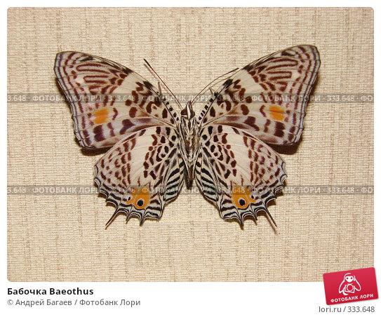Бабочка Baeothus, фото № 333648, снято 27 февраля 2008 г. (c) Андрей Багаев / Фотобанк Лори