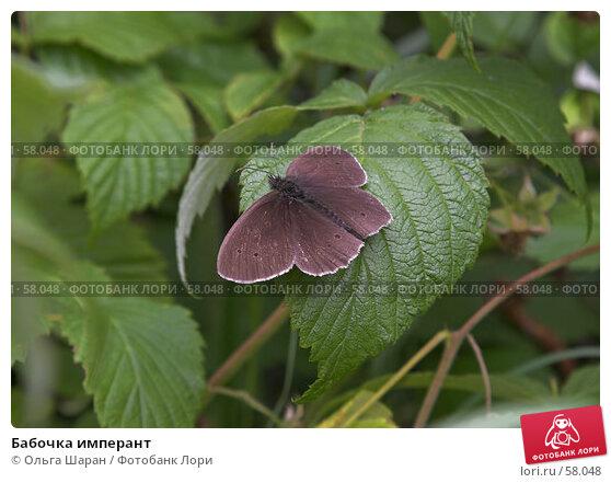Бабочка имперант, фото № 58048, снято 30 июня 2007 г. (c) Ольга Шаран / Фотобанк Лори