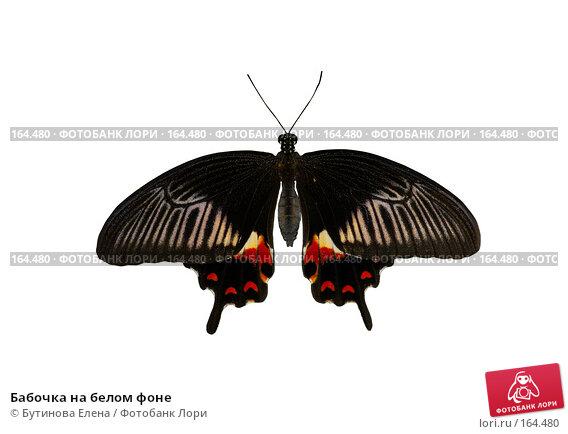 Купить «Бабочка на белом фоне», фото № 164480, снято 28 августа 2007 г. (c) Бутинова Елена / Фотобанк Лори