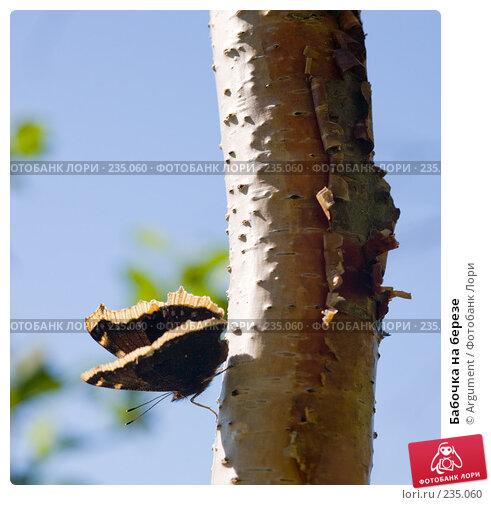Бабочка на березе, фото № 235060, снято 10 августа 2007 г. (c) Argument / Фотобанк Лори