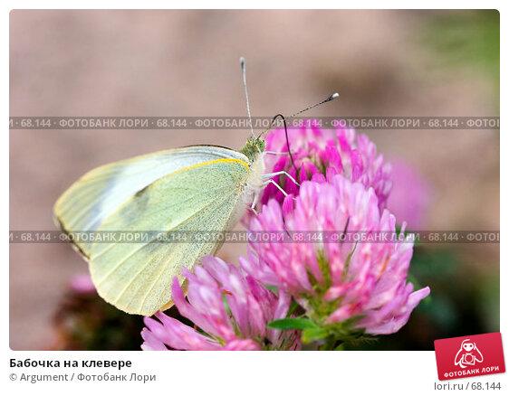 Бабочка на клевере, фото № 68144, снято 7 сентября 2006 г. (c) Argument / Фотобанк Лори