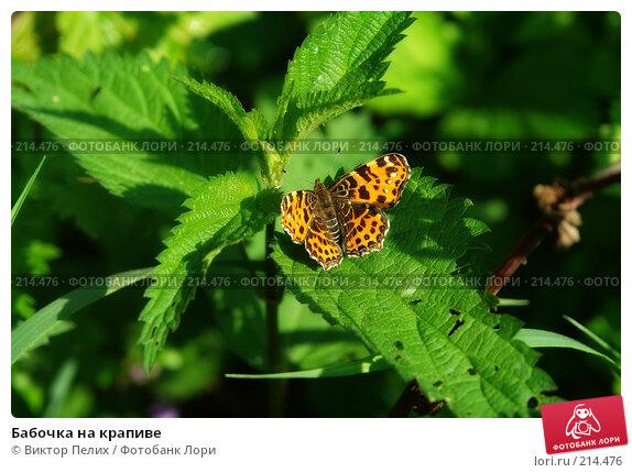 Купить «Бабочка на крапиве», фото № 214476, снято 20 мая 2007 г. (c) Виктор Пелих / Фотобанк Лори