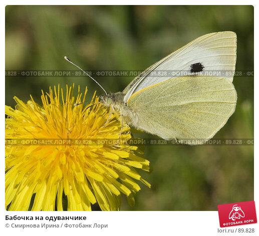 Бабочка на одуванчике, фото № 89828, снято 26 мая 2007 г. (c) Смирнова Ирина / Фотобанк Лори