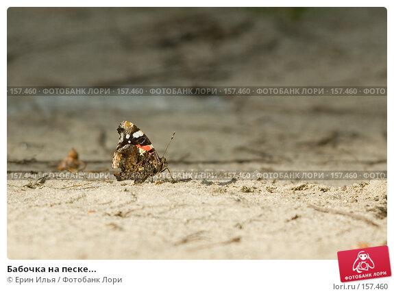 Бабочка на песке..., фото № 157460, снято 10 июля 2007 г. (c) Ерин Илья / Фотобанк Лори