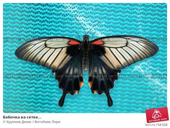 Бабочка на сетке..., фото № 54528, снято 15 мая 2007 г. (c) Крупнов Денис / Фотобанк Лори