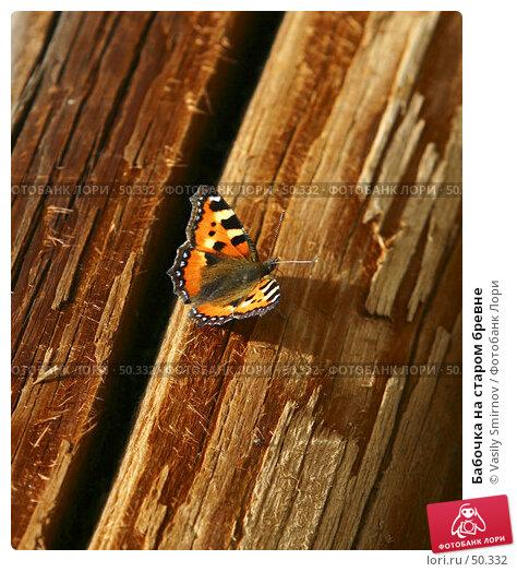 Бабочка на старом бревне, фото № 50332, снято 26 августа 2003 г. (c) Vasily Smirnov / Фотобанк Лори