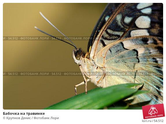 Бабочка на травинке, фото № 54512, снято 7 мая 2007 г. (c) Крупнов Денис / Фотобанк Лори