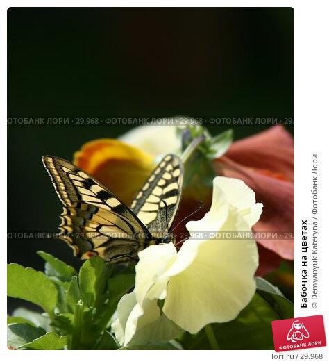 Бабочка на цветах, фото № 29968, снято 26 марта 2007 г. (c) Demyanyuk Kateryna / Фотобанк Лори