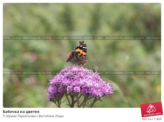 Бабочка на цветке, эксклюзивное фото № 1424, снято 18 сентября 2005 г. (c) Ирина Терентьева / Фотобанк Лори