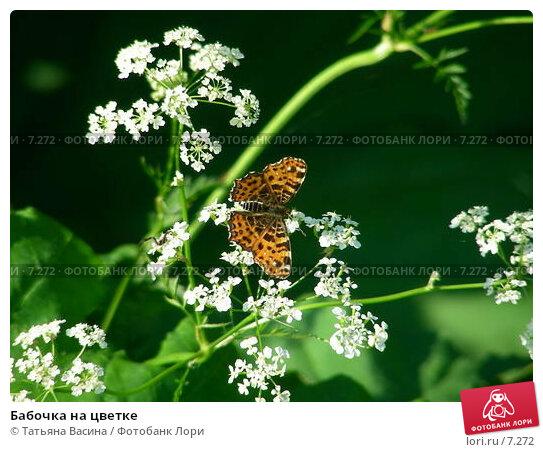Бабочка на цветке, фото № 7272, снято 17 июня 2006 г. (c) Татьяна Васина / Фотобанк Лори