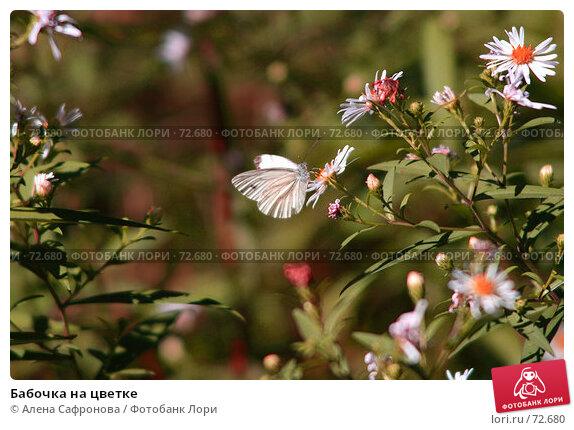 Бабочка на цветке, фото № 72680, снято 9 августа 2007 г. (c) Алена Сафронова / Фотобанк Лори