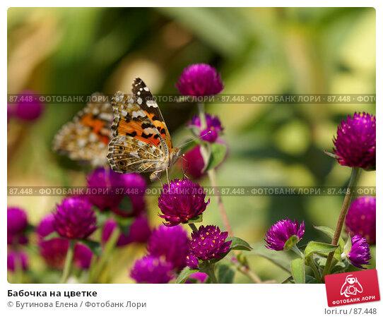 Бабочка на цветке, фото № 87448, снято 28 августа 2007 г. (c) Бутинова Елена / Фотобанк Лори