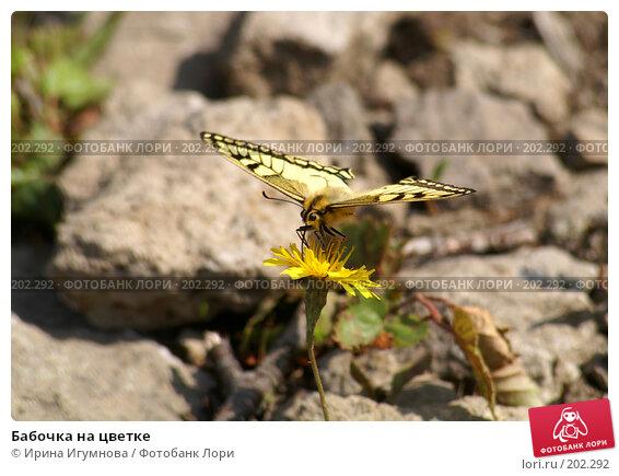Бабочка на цветке, фото № 202292, снято 4 сентября 2006 г. (c) Ирина Игумнова / Фотобанк Лори