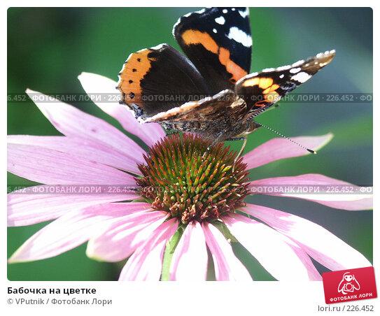 Бабочка на цветке, фото № 226452, снято 29 августа 2006 г. (c) VPutnik / Фотобанк Лори