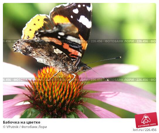 Бабочка на цветке, фото № 226456, снято 29 августа 2006 г. (c) VPutnik / Фотобанк Лори