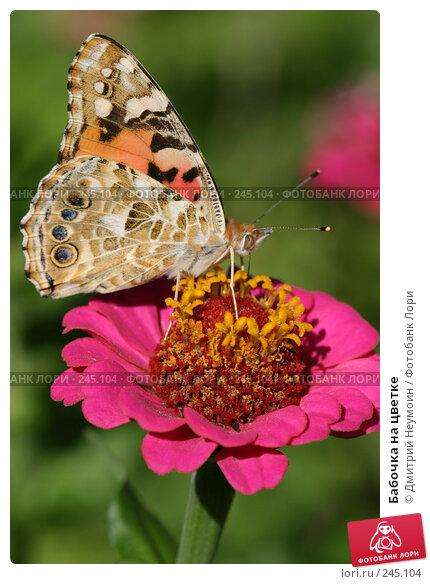 Бабочка на цветке, эксклюзивное фото № 245104, снято 7 сентября 2004 г. (c) Дмитрий Нейман / Фотобанк Лори