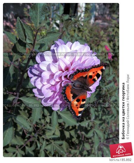Бабочка на цветке георгина, фото № 85892, снято 14 сентября 2007 г. (c) Геннадий Соловьев / Фотобанк Лори