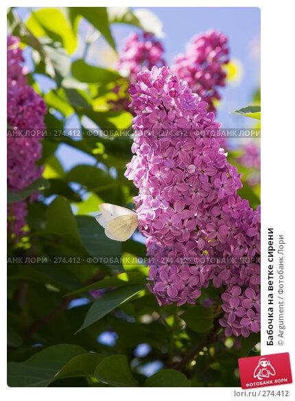 Бабочка на ветке сирени, фото № 274412, снято 26 апреля 2008 г. (c) Argument / Фотобанк Лори
