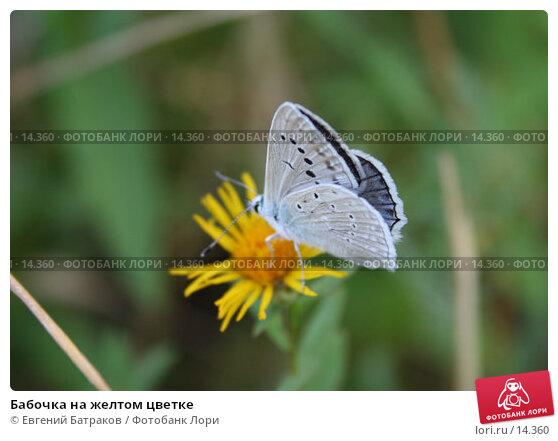 Бабочка на желтом цветке, фото № 14360, снято 16 июля 2006 г. (c) Евгений Батраков / Фотобанк Лори