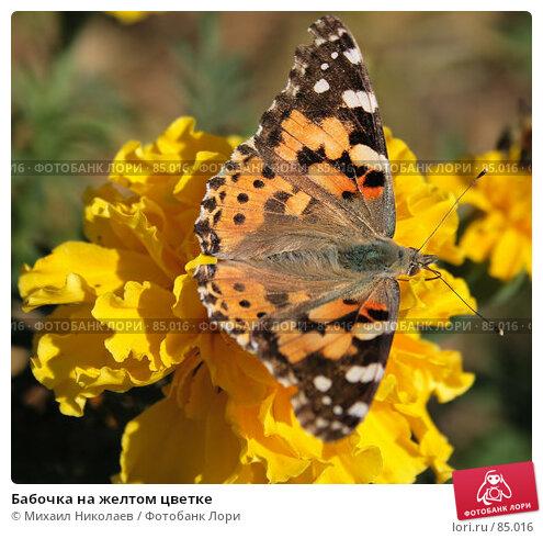 Бабочка на желтом цветке, фото № 85016, снято 7 сентября 2007 г. (c) Михаил Николаев / Фотобанк Лори