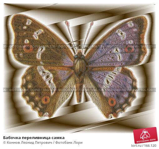 Купить «Бабочка переливница самка», иллюстрация № 166120 (c) Коннов Леонид Петрович / Фотобанк Лори