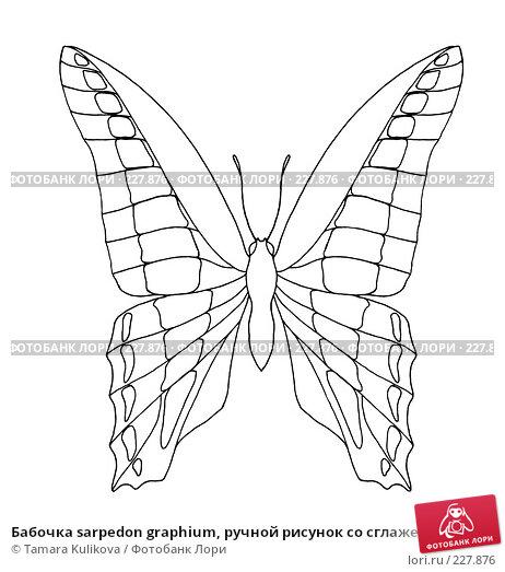 Купить «Бабочка sarpedon graphium, ручной рисунок со сглаженными линиями», иллюстрация № 227876 (c) Tamara Kulikova / Фотобанк Лори