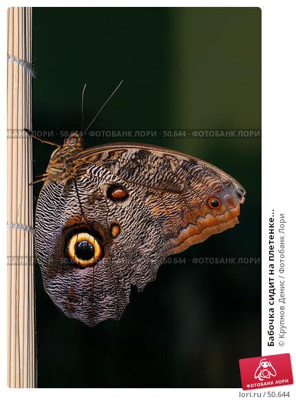 Купить «Бабочка сидит на плетенке...», фото № 50644, снято 7 мая 2007 г. (c) Крупнов Денис / Фотобанк Лори