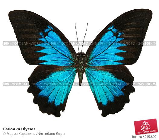 Бабочка Ulysses, фото № 245800, снято 30 ноября 2007 г. (c) Мария Кирюхина / Фотобанк Лори