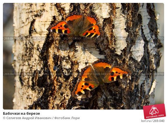 Бабочки на березе, фото № 269040, снято 12 апреля 2008 г. (c) Селигеев Андрей Иванович / Фотобанк Лори