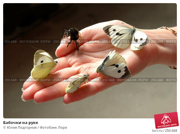 Бабочки на руке, фото № 250668, снято 12 июня 2005 г. (c) Юлия Селезнева / Фотобанк Лори