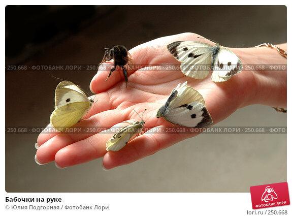 Купить «Бабочки на руке», фото № 250668, снято 12 июня 2005 г. (c) Юлия Селезнева / Фотобанк Лори