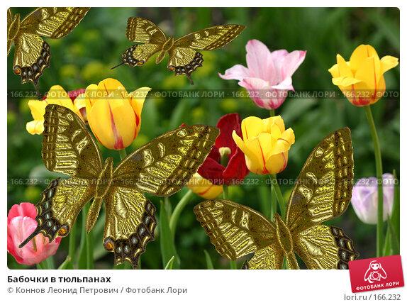 Бабочки в тюльпанах, иллюстрация № 166232 (c) Коннов Леонид Петрович / Фотобанк Лори