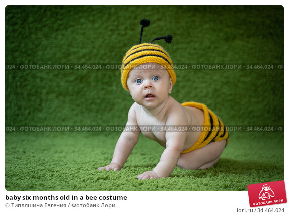 baby six months old in a bee costume. Стоковое фото, фотограф Типляшина Евгения / Фотобанк Лори