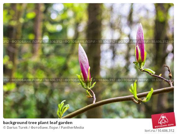 background tree plant leaf garden. Стоковое фото, фотограф Darius Turek / PantherMedia / Фотобанк Лори