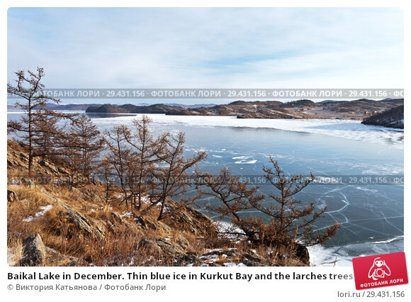 Baikal Lake in December. Thin blue ice in Kurkut Bay and the larches trees on the rocky shore in a cold afternoon. Стоковое фото, фотограф Виктория Катьянова / Фотобанк Лори
