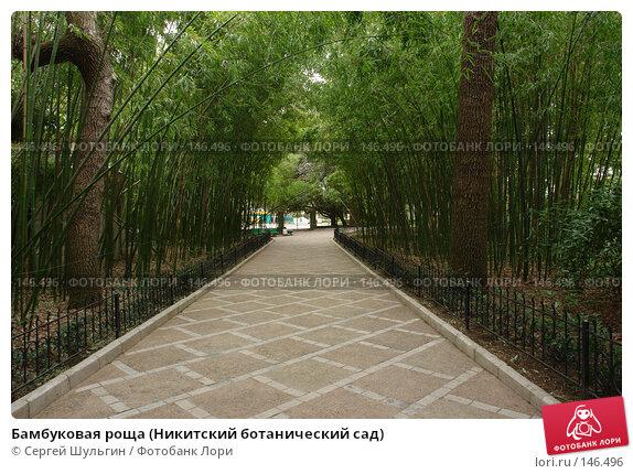Бамбуковая роща (Никитский ботанический сад), фото № 146496, снято 8 апреля 2007 г. (c) Сергей Шульгин / Фотобанк Лори