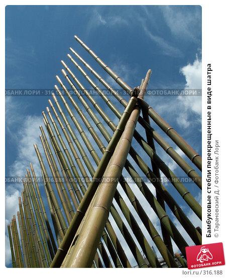 Бамбуковые стебли перекрещенные в виде шатра, фото № 316188, снято 22 июля 2006 г. (c) Тарановский Д. / Фотобанк Лори