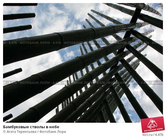 Бамбуковые стволы в небе, фото № 4476, снято 21 мая 2006 г. (c) Агата Терентьева / Фотобанк Лори