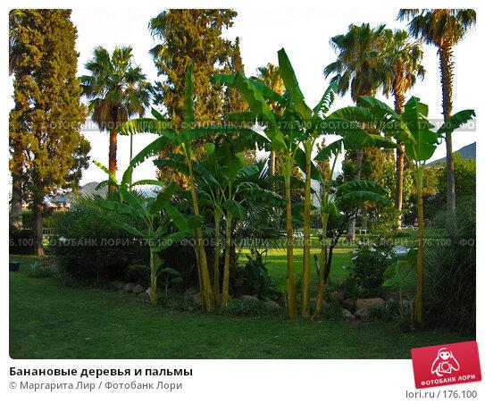 Банановые деревья и пальмы, фото № 176100, снято 8 июля 2006 г. (c) Маргарита Лир / Фотобанк Лори