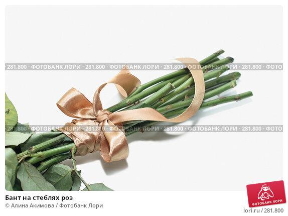 Купить «Бант на стеблях роз», фото № 281800, снято 1 мая 2008 г. (c) Алина Акимова / Фотобанк Лори
