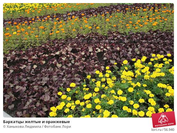 Бархатцы желтые и оранжевые, фото № 56940, снято 28 июня 2007 г. (c) Ханыкова Людмила / Фотобанк Лори