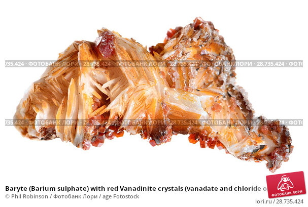 Купить «Baryte (Barium sulphate) with red Vanadinite crystals (vanadate and chloride of lead).», фото № 28735424, снято 12 мая 2018 г. (c) age Fotostock / Фотобанк Лори