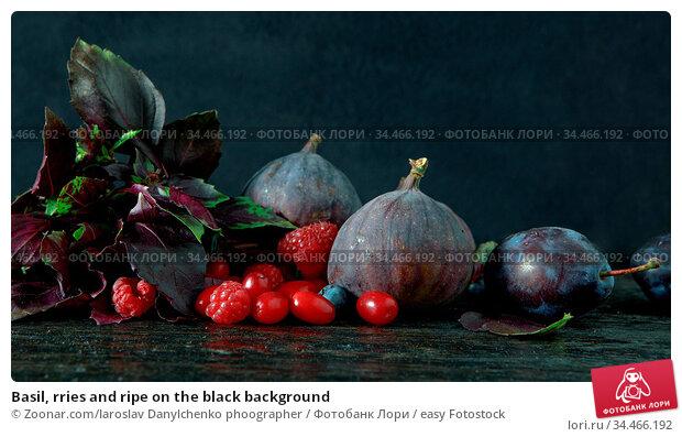 Basil, rries and ripe on the black background. Стоковое фото, фотограф Zoonar.com/Iaroslav Danylchenko phoographer / easy Fotostock / Фотобанк Лори