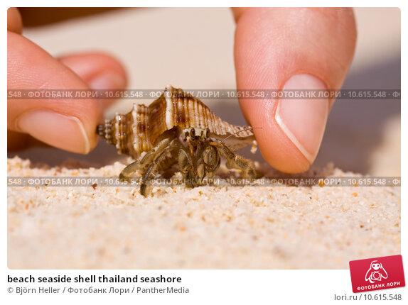 beach seaside shell thailand seashore. Стоковое фото, фотограф Björn Heller / PantherMedia / Фотобанк Лори