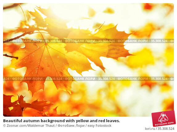 Beautiful autumn background with yellow and red leaves. Стоковое фото, фотограф Zoonar.com/Waldemar Thaut / easy Fotostock / Фотобанк Лори