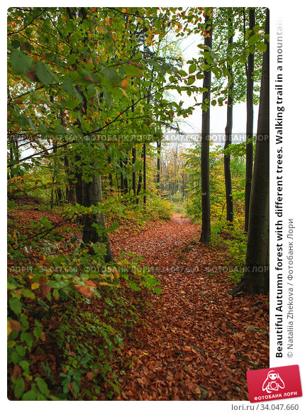 Купить «Beautiful Autumn forest with different trees. Walking trail in a mountain forest. Deciduous forest. A wood or forest in leaf.», фото № 34047660, снято 30 октября 2019 г. (c) Nataliia Zhekova / Фотобанк Лори